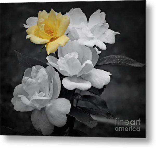 Yellow Rose Cluster Partial Color Metal Print