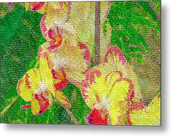 Yellow/rouge Orchids Metal Print