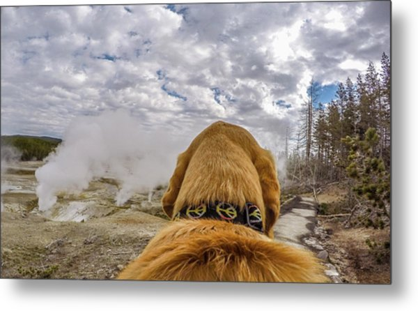 Metal Print featuring the photograph Yellowstone By Photo Dog Jackson by Matthew Irvin