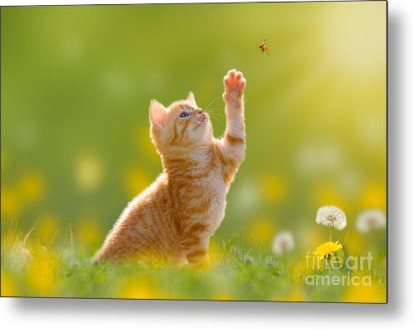 Young Cat  Kitten Hunting A Ladybug Metal Print