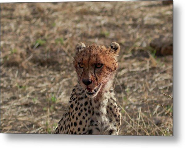 Young Cheetah Metal Print