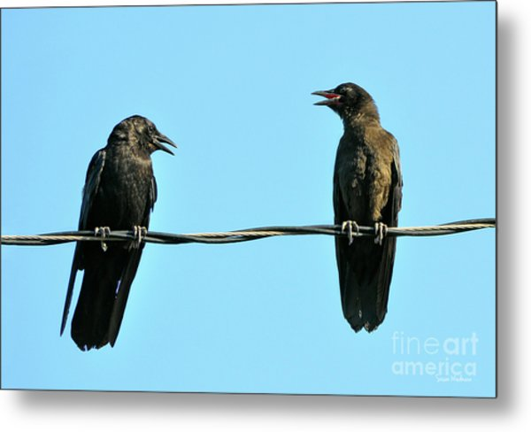 Young Crow Chatting With Mom Metal Print
