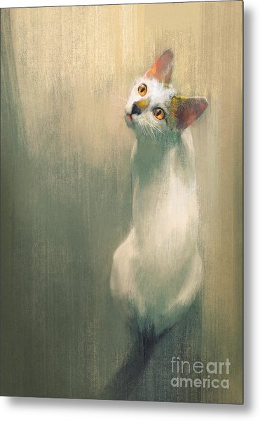 Young White Cat Looking Up,digital Metal Print