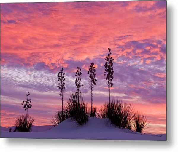Yucca At Sunset In White Sands National Metal Print by Russell Burden