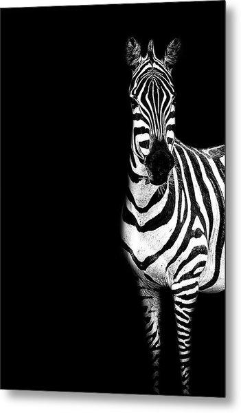 Zebra Drama Metal Print