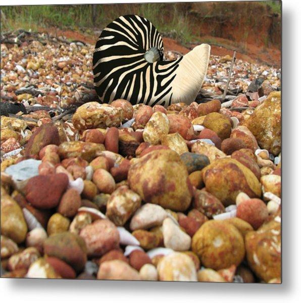 Zebra Nautilus Shell On Bauxite Beach Metal Print