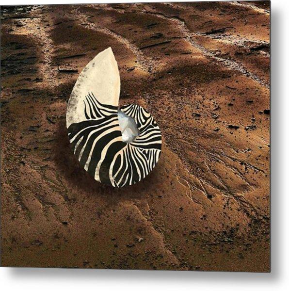 Zebra Nautilus Shell On The Sand Metal Print