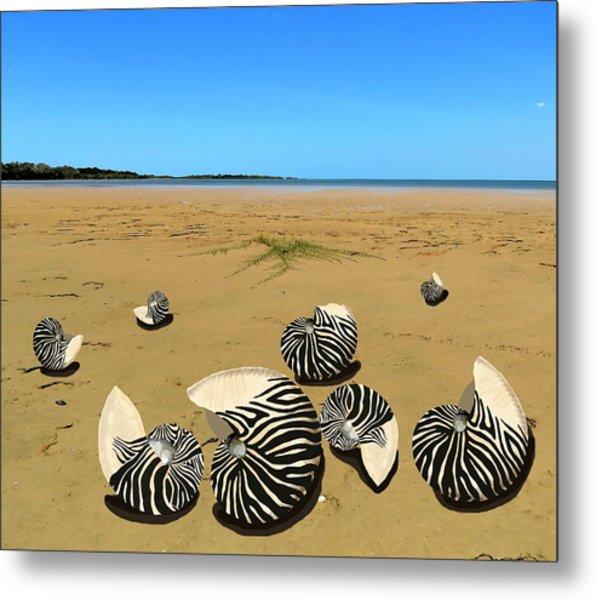 Zebra Nautilus Shells On The Beach  Metal Print