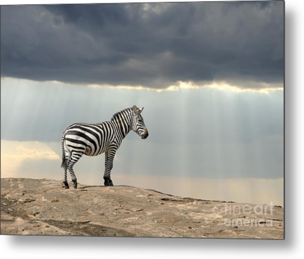 Zebra On Stone In Africa, National Park Metal Print