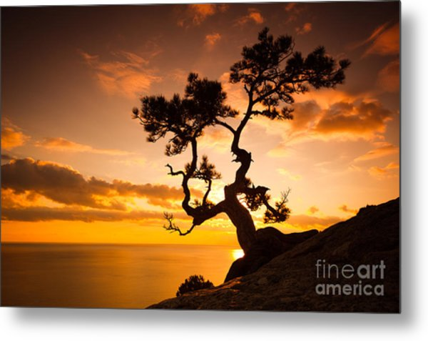 Zen Is A Tree On The Cliff Rocks And Metal Print