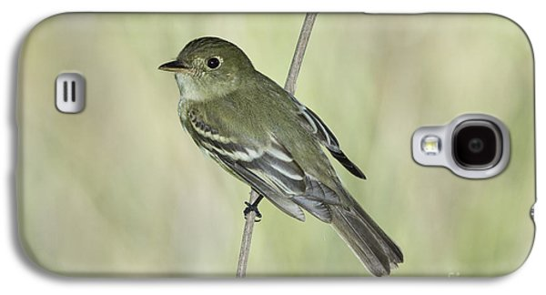 Acadian Flycatcher Galaxy S4 Case by Anthony Mercieca