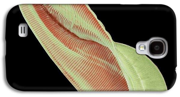 Amphiprora Diatom Galaxy S4 Case by Steve Gschmeissner