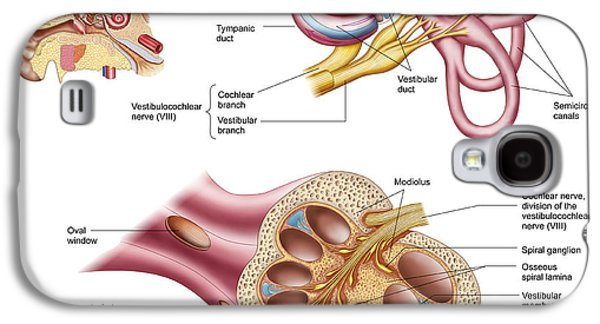 Anatomy Of The Cochlear Duct Galaxy S4 Case by Stocktrek Images