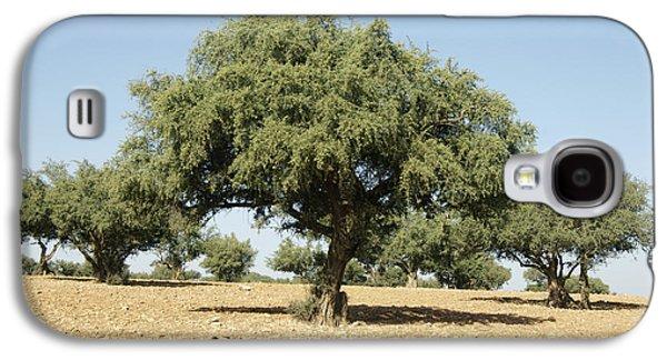 Argan Trees Argania Spinosa Galaxy S4 Case