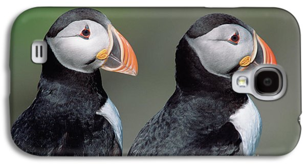 Atlantic Puffins In Breeding Colors Galaxy S4 Case by