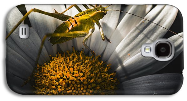 Australian Grasshopper On Flowers. Spring Concept Galaxy S4 Case by Jorgo Photography - Wall Art Gallery