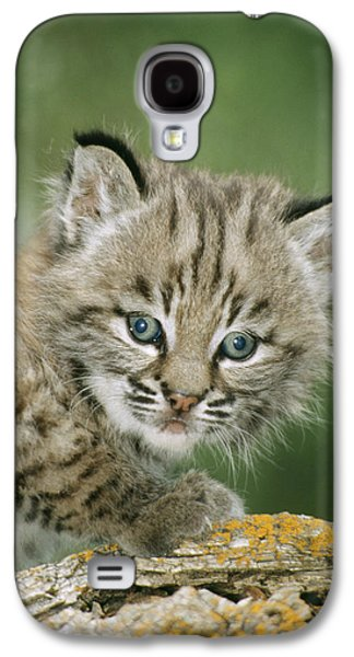 Baby Bobcat Galaxy S4 Case by M. Watson
