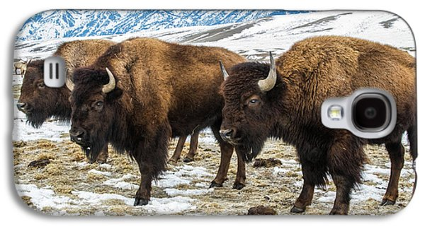 Bison In The 24,700-acre National Elk Galaxy S4 Case