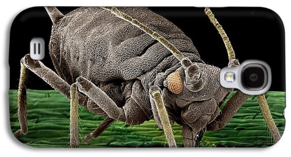 Black Aphid Feeding On Sap Galaxy S4 Case by Clouds Hill Imaging Ltd