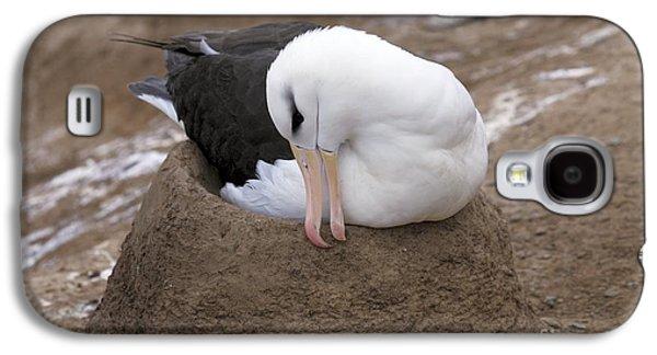 Black-browed Albatross Nesting Galaxy S4 Case