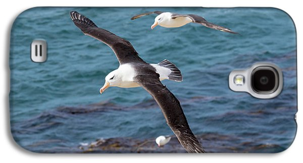 Black-browed Albatross (thalassarche Galaxy S4 Case by Martin Zwick