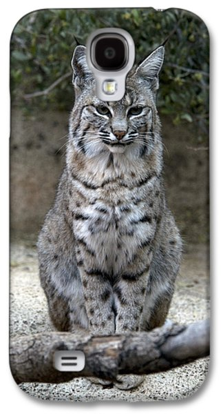 Bobcat Galaxy S4 Case by Mark Newman