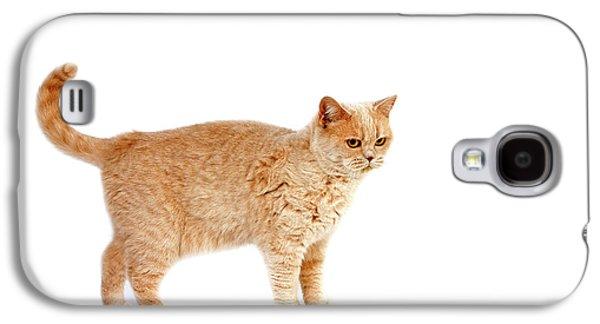 British Shorthair Creme Galaxy S4 Case by Gerard Lacz