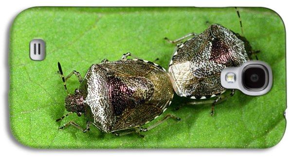 Bronze Shieldbugs Mating Galaxy S4 Case by Nigel Downer