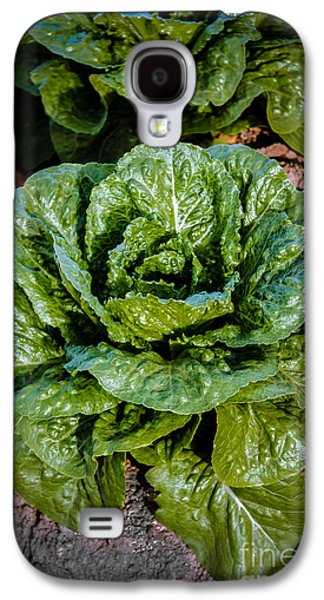 Butterhead Lettuce Galaxy S4 Case