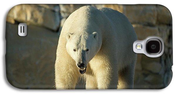 Canada, Nunavut Territory, Polar Bear Galaxy S4 Case by Paul Souders