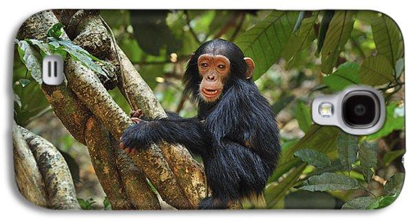 Chimpanzee Baby On Liana Gombe Stream Galaxy S4 Case by Thomas Marent