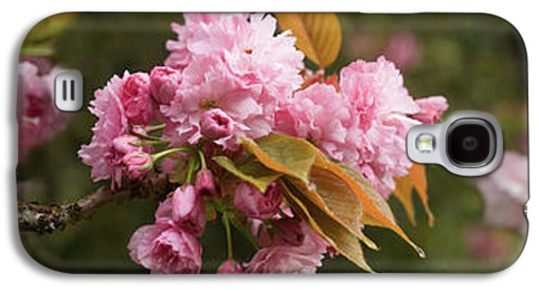 Close-up Of Cherry Blossom Flowers Galaxy S4 Case by Panoramic Images