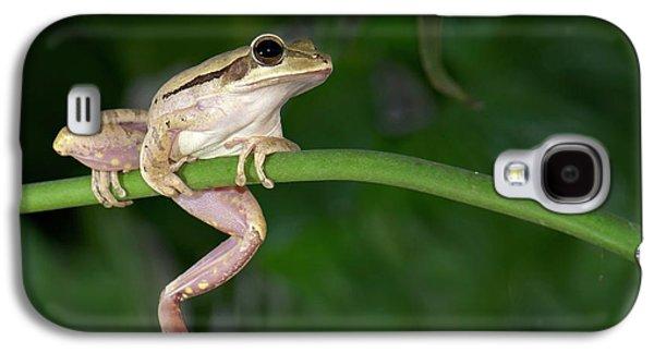 Common Indian Tree Frog Galaxy S4 Case by K Jayaram