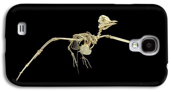 Common Tern Galaxy S4 Case by Natural History Museum, London