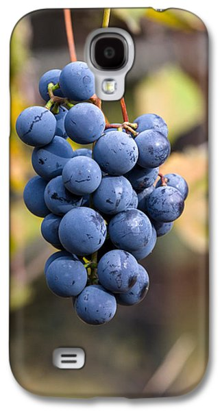 Concord Grapes Galaxy S4 Case by Michael Russell