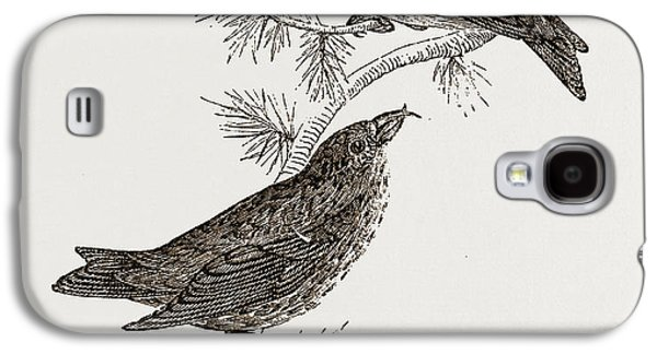 Crossbill Galaxy S4 Case - Crossbills by Litz Collection