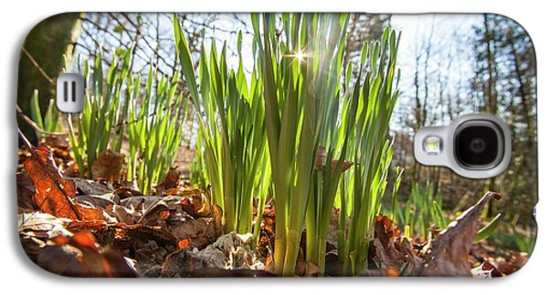 Daffodils In Spring In Ambleside Galaxy S4 Case by Ashley Cooper