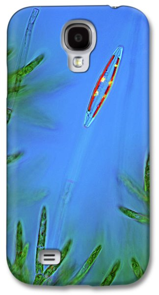 Diatom And Green Algae Galaxy S4 Case by Marek Mis
