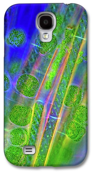 Diatoms And Spirogyra Algae Galaxy S4 Case by Marek Mis