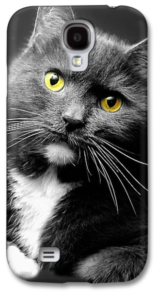 Domestic Gray And White Short Hair Galaxy S4 Case by Diana Angstadt