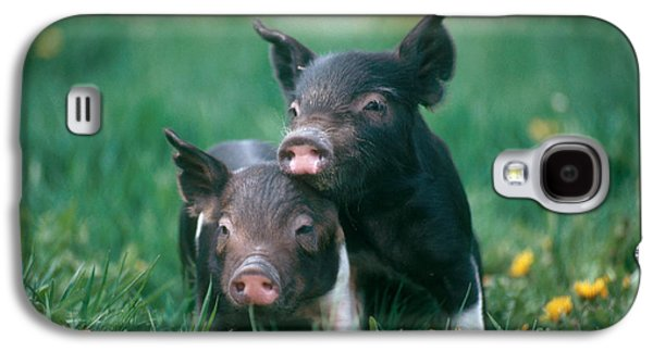 Pig Galaxy S4 Case - Domestic Piglets by Alan Carey