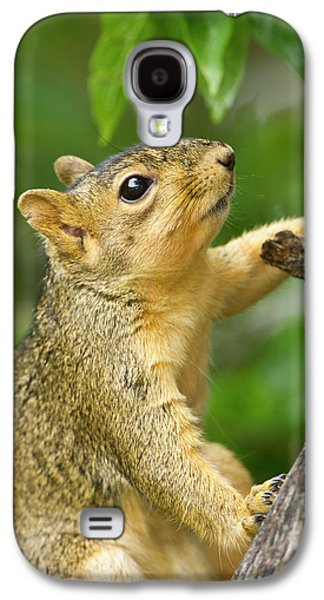 Eastern Fox Squirrel (sciurus Niger Galaxy S4 Case by Larry Ditto
