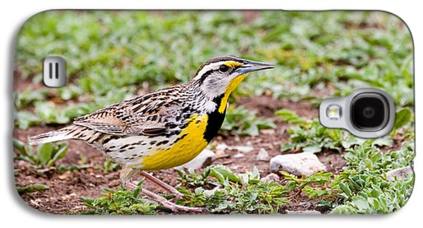 Eastern Meadowlark Sturnella Magna Galaxy S4 Case by Gregory G. Dimijian