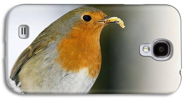 European Robin Feeding On A Mealworm Galaxy S4 Case by Duncan Shaw