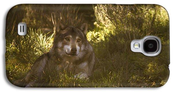 European Wolf Galaxy S4 Case by Angel  Tarantella