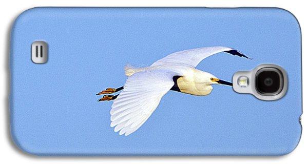 Florida, Venice, Snowy Egret Flying Galaxy S4 Case