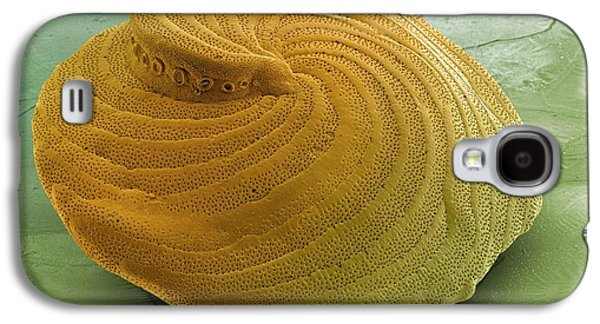 Foraminiferan Shell Galaxy S4 Case by Ami Images