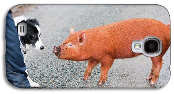 Free Range Pig Galaxy S4 Case