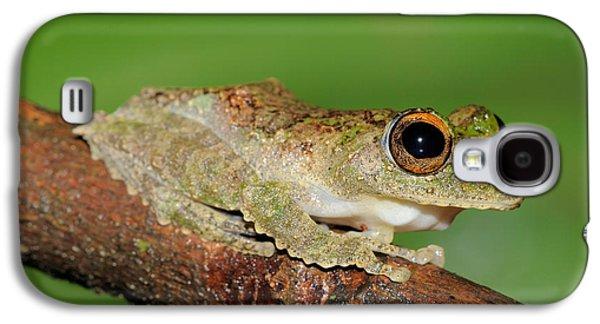 Frilled Tree Frog, Malaysia Galaxy S4 Case by Fletcher & Baylis