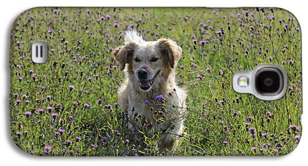 Golden Retriever Dog Galaxy S4 Case by John Daniels